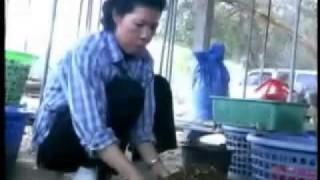 วิธีการเพาะเห็ดฟางในตะกร้า